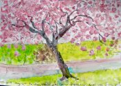 Homage to the Cherry Blossom